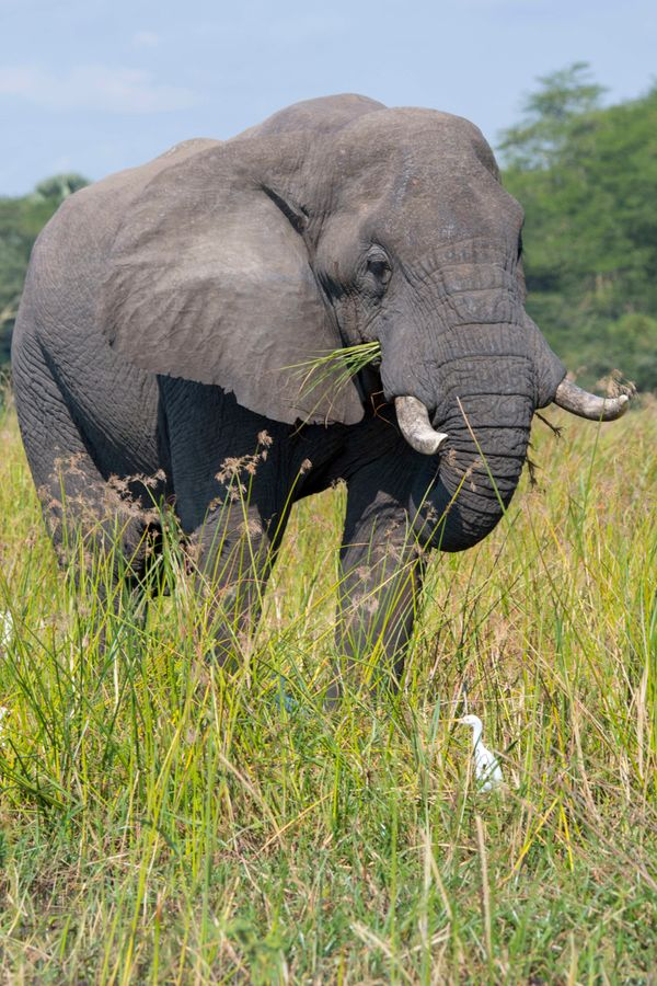 """<a href=""""https://www.huffpost.com/entry/500-elephants-moving-to-repopulate-area-where-species-was-wiped-out_n_578e9195e4b0f18"""