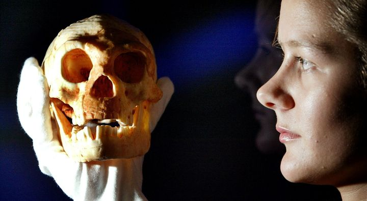 A model of a skull discovered on a remote Indonesian island is held by an employee at the Science Museum in London, Oct. 27,