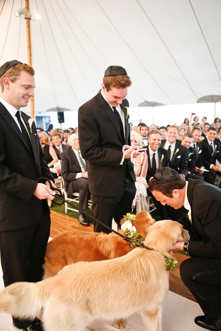Finn (right) had the honorable role of ring bearer in the author's wedding, a role in which he excelled.