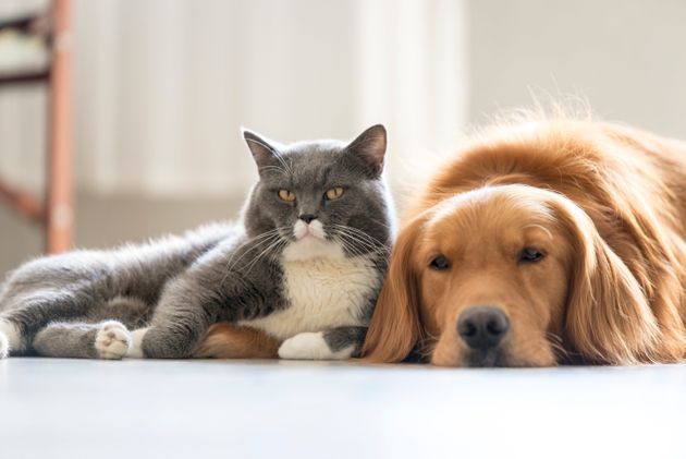 Cats And Dogs Have Equal Intellegence, New Research Finds