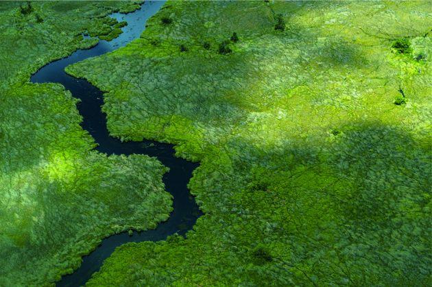 Location:Moremi Game Reserve in Botswana's Okavango Delta region