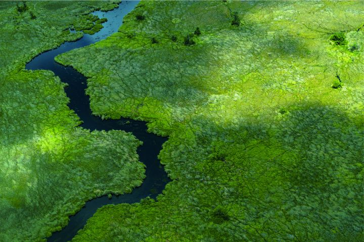 "Location:&nbsp;Moremi Game Reserve in Botswana&rsquo;s Okavango Delta region<br /><br />""This photograph was taken in January 2016 and features a bird&rsquo;s-eye view of the approach to the Moremi Game Reserve in Botswana&rsquo;s Okavango Delta region. Moremi is cut off from the remainder of the Delta and travel to and from its lodges requires transit by light aircraft or helicopter. The shot was taken from a Cessna plane and shows one of the many ephemeral tributaries of the Okavango basin which snake through the landscape following the annual discharge of rain from the Angolan highlands.""&nbsp;"