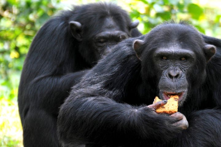 Satellite images have helped conservationists plan better chimpanzee conservation strategies in Gombe National Park, and have