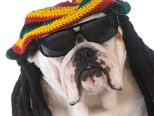 Dogs Love Chilling To Reggae Says Noteworthy Study | HuffPost