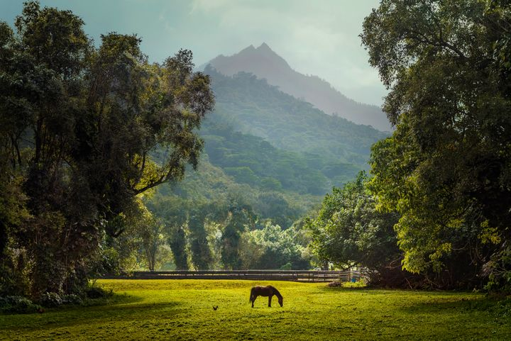 The island of Kauai is abundant with lush fields, forests and farms.