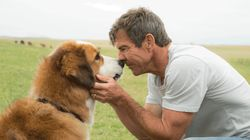No Animals Were Harmed On Set Of 'A Dog's Purpose,' According To