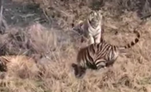 Mobile phone footage of the attack was shot by other zoo