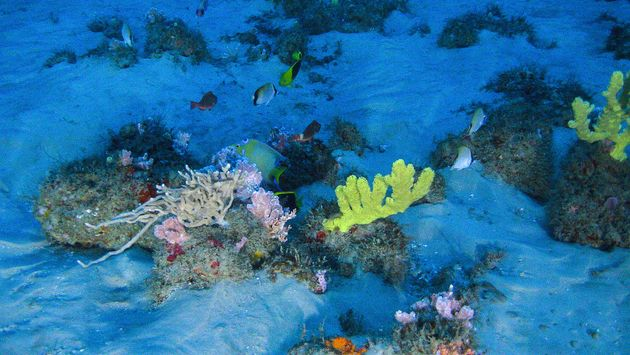 Scientists believe the surprise Amazon coral reef could be a new marine