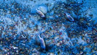 Oceanographers snap first photos of life in the Amazon Reef