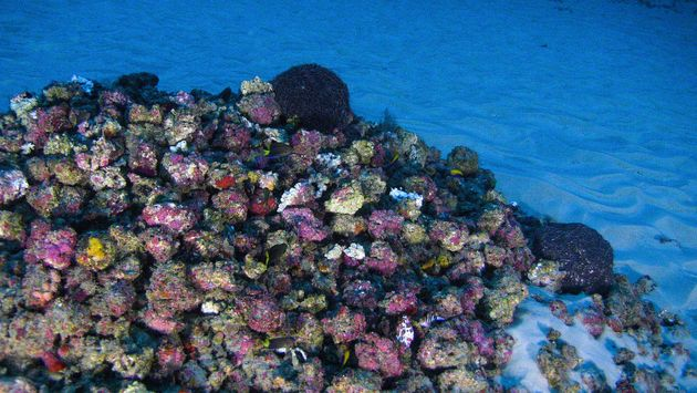 Researchers capture the colors of the Amazon reef on film for the first