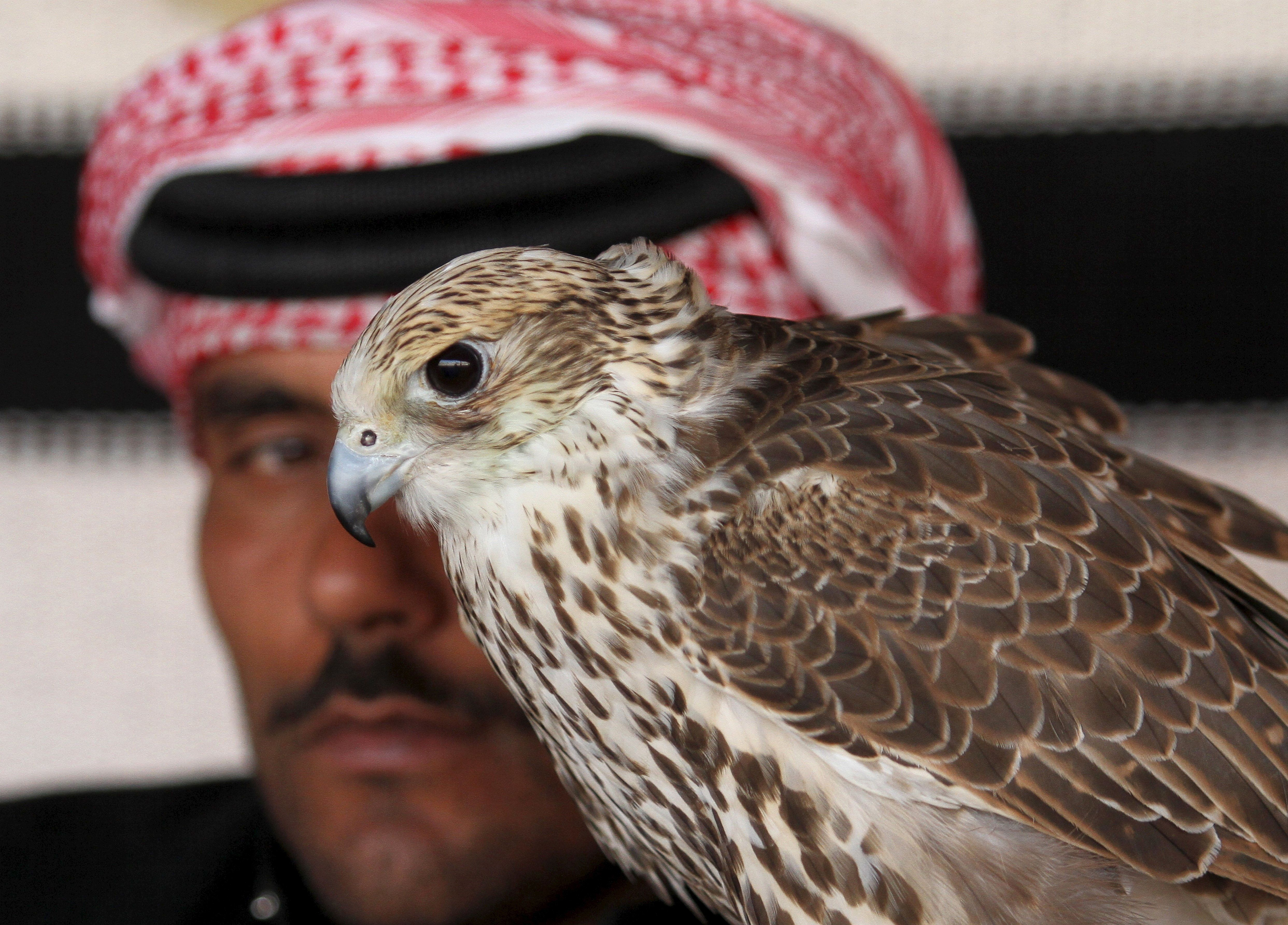 """A man sits next to his falcon as he waits to participate in a falcon contest during Qatar International Falcons and Hunting Festival at Sealine desert, Qatar January 29, 2016. The participants at the contest compete for the fastest falcon at attacking its prey. Scores of wealthy Gulf Arabs descend on Iraq to hunt the houbara bustard, a rare desert bird, with trained falcons through the winter months. But the kidnapping of 26 Qataris in December 2015 in the Iraqi desert while hunting, including members of the country's royal family, has highlighted the risks of pursuing the """"sport of kings"""" at a time of heightened regional turmoil.  Picture taken January 29, 2016. REUTERS/Naseem Zeitoon"""