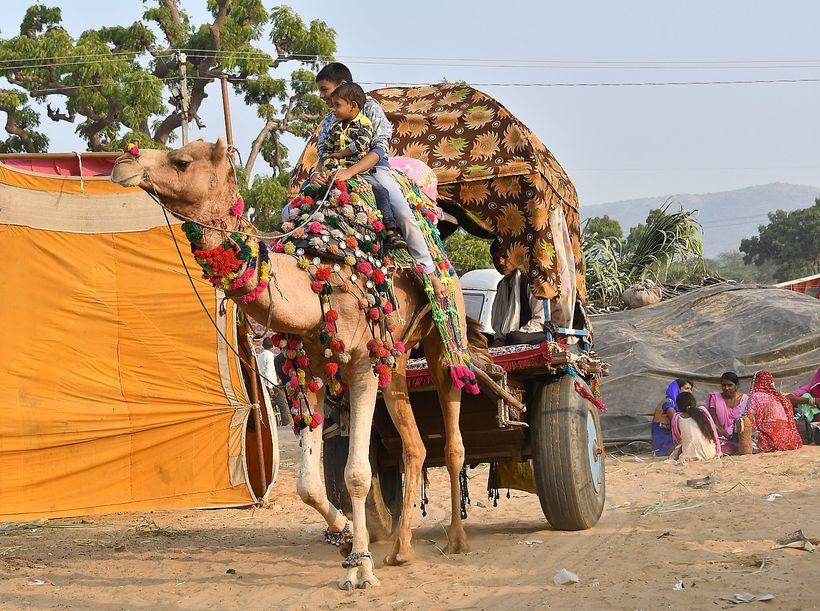 <em>Camel cart, Pushkar Camel Fair, India</em>    ody>G����E�