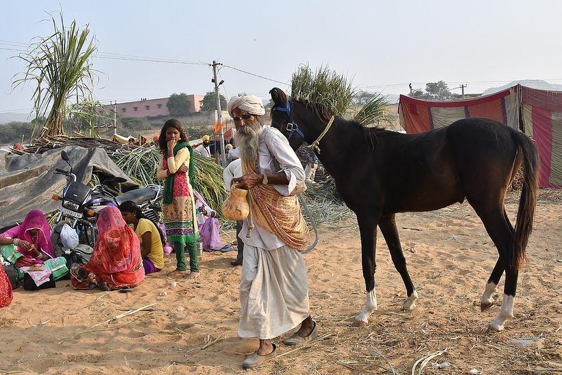 <em>Acquiring a horse at the Pushkar fair</em>    l> ����E�
