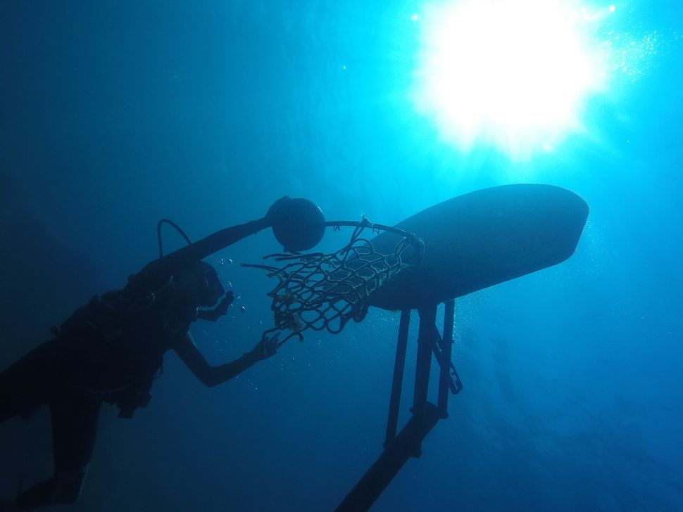 """Underwater Basketball,"" a photo by 13-year-old Josephine Goldman that won 2nd place in the National Geographic contest."