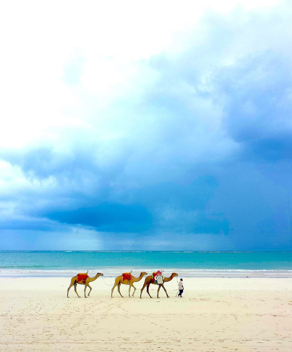 """Piers Nicklin, 12<br>""""Napping on the beach, I opened my eyes to this colorful parade of camels on&nbsp;Galu Beach in Kenya."""""""
