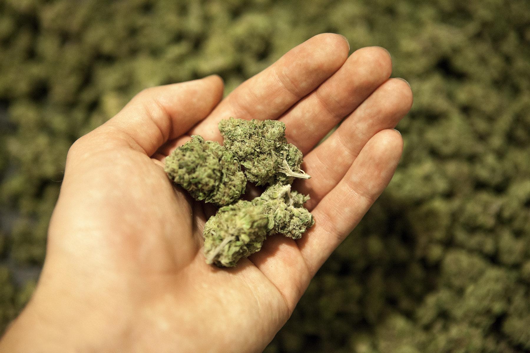 decriminalisation of marijuana