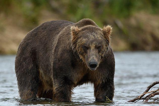 ライオンなどの野生動物を趣味で射殺する「トロフィーハンティング」団体がオークション開催