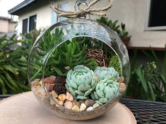 "$36.95, Succulents and More. Buy it <a href=""https://www.etsy.com/listing/262477810/woodland-succulent-terrarium-kit-rustic?g"