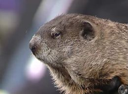 That Time Punxsutawney Phil Appeared On 'The Oprah Winfrey Show'
