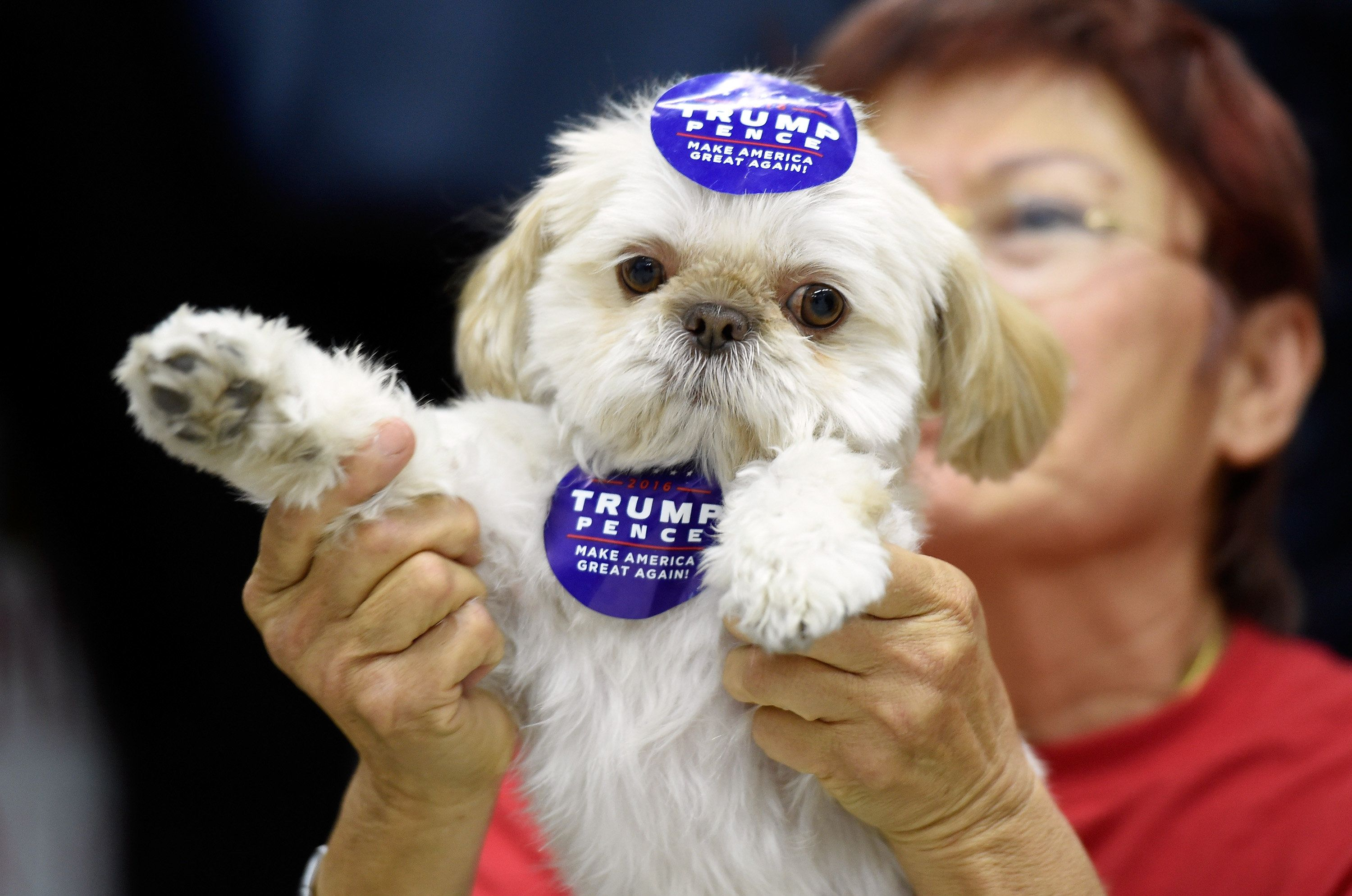 LAS VEGAS, NV - NOVEMBER 03:  Donald Trump supporter Sandi Steinbeck of Las Vegas holds up her dog, a Shih Tzu named Teddy Bear, at a get-out-the-vote rally for the Republican presidential nominee at Ahern Manufacturing on November 3, 2016 in Las Vegas, Nevada. Donald Trump Jr. spoke at the event and urged people to vote for his father during early voting, which ends on November 4 in the battleground state, and on Election Day November 8.  (Photo by David Becker/Getty Images)