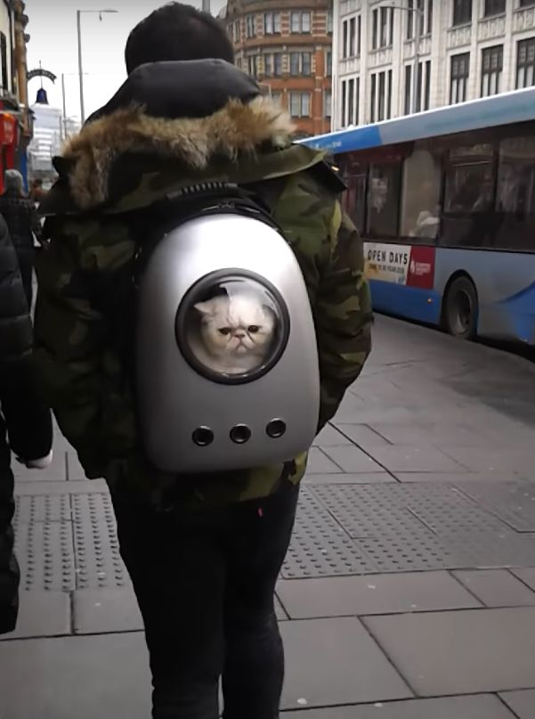 Man Carries Cat Around Nottingham In His Backpack, His Kitty Isn't