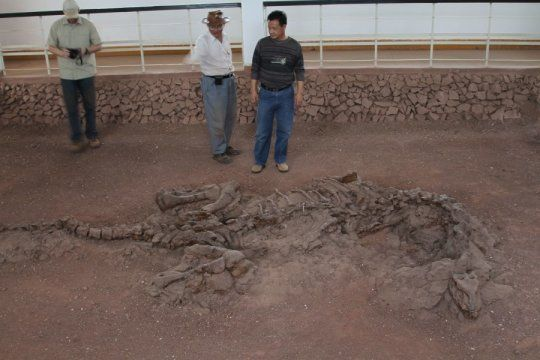 Skeleton of the 195-million-year-old dinosaur Lufengosaurus preserved as found in the ground in Yunnan Province China.