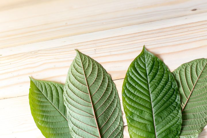 Leaves of Mitragyna speciosa, which are typically dried and crushed to make kratom.