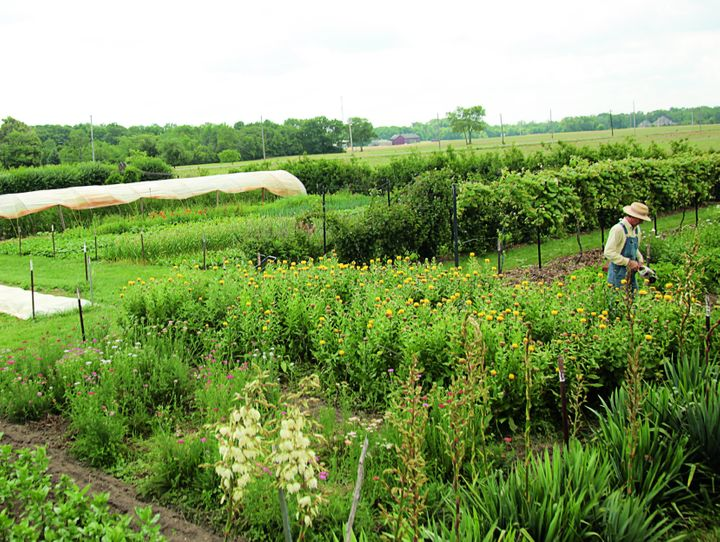 Cook's Garden in New Lebanon, Ohio, is one of the 15 small farms spotlighted in Volk's new book. Photo from Compact Farms, us