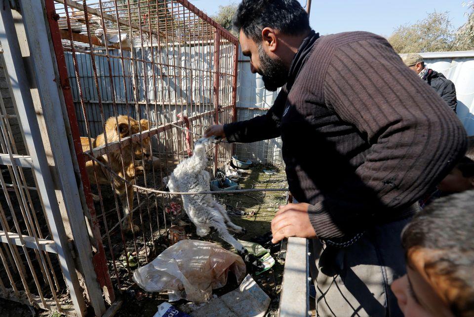 A volunteer feeds a lion.
