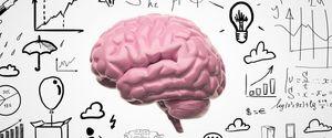 MEMBRANE CEREBELLUM ANATOMY HUMAN NERVOUS SYSTEM S