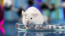 Cannibalism Among 8 Shocking Animal Testing Disasters