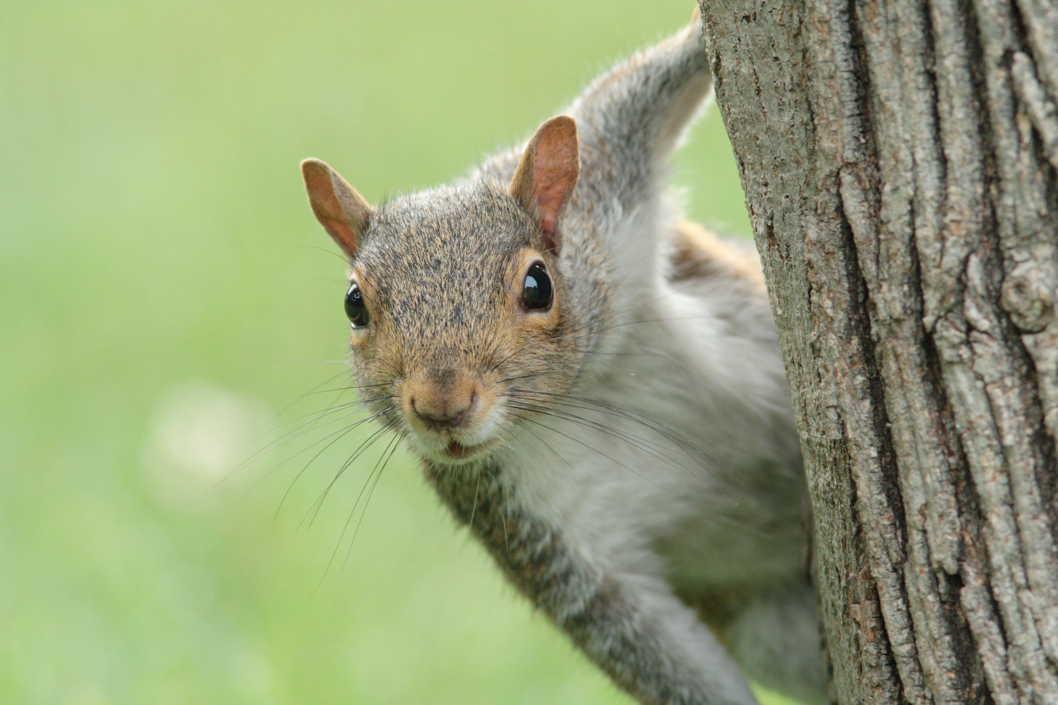 This Paper Legit Has A 'Squirrel Of The Month' And We're Diggin'
