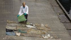 Beached Whale Found With 30 Plastic Bags Crammed In Its