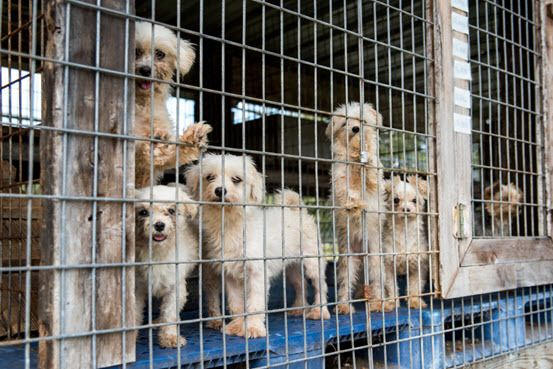 Dogs rescued from a Florida puppy mill in 2015