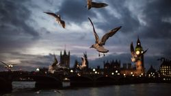 Seagulls Targeted By Armed Vigilantes, MPs Hear Amid 'Gull Wars'