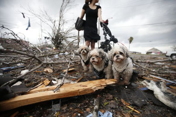 A woman holds three dogs by a make-shift leash among the debris left behind by a tornado.