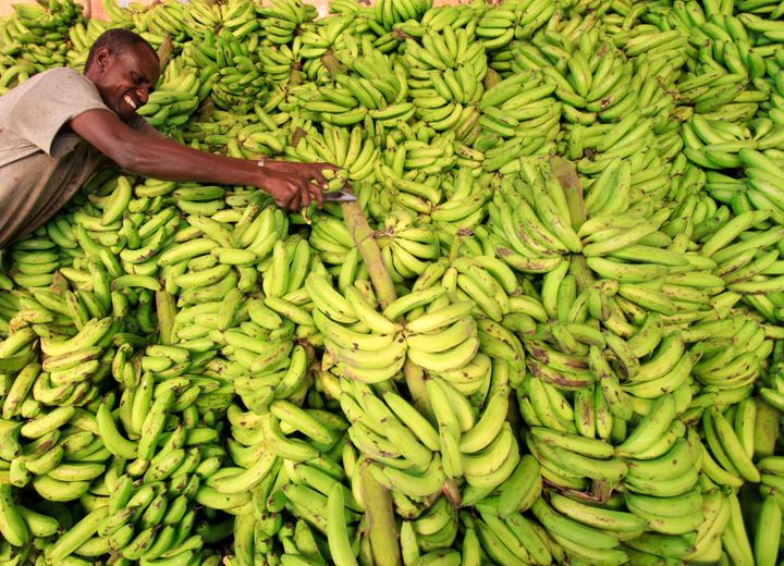A vendor displays bananas at his stall in Somalia.