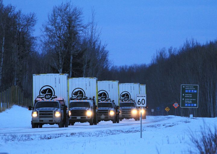 Trucks loaded with custom shipping containers full of bison leave Elk Island National Park for the 250-mile trip to the stagi