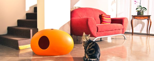 Your cat will not want to follow you into your basic bathroom ever again after experiencing this supercool litter box. This e