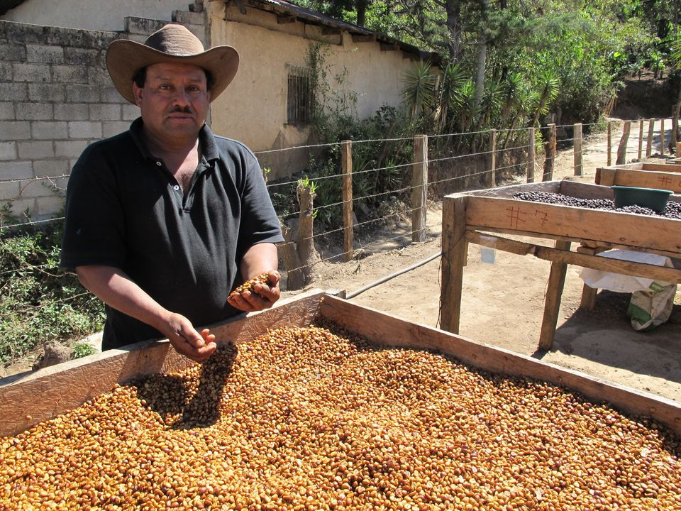 A coffee farmer and other members of his cooperative in Nueva Santa Rosa have built drying racks for...