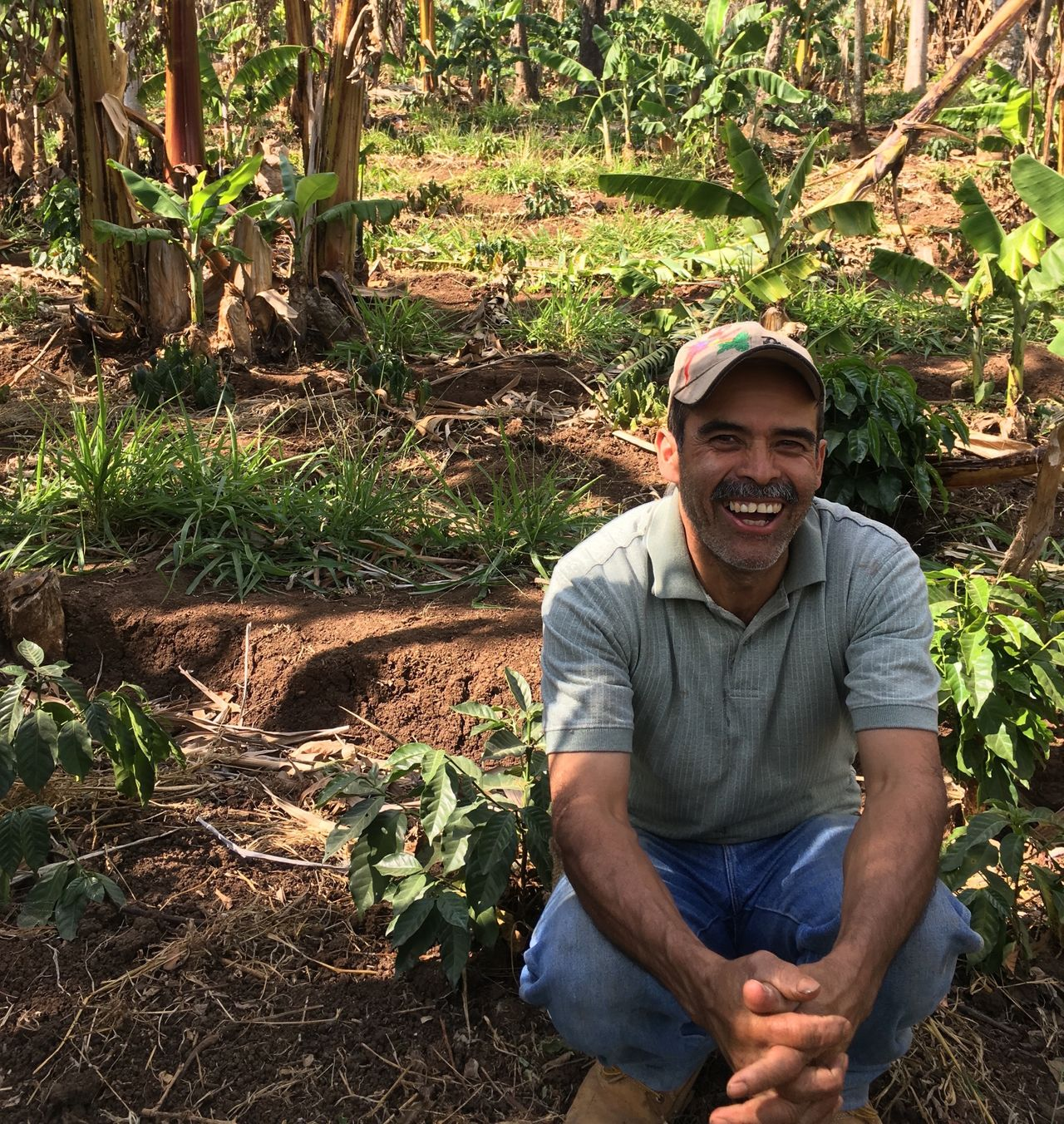 A farmer on a newly planted coffee plantation that employed remediation techniques to guard against the impacts of worsening drought conditions. El Bosque, Guatemala.