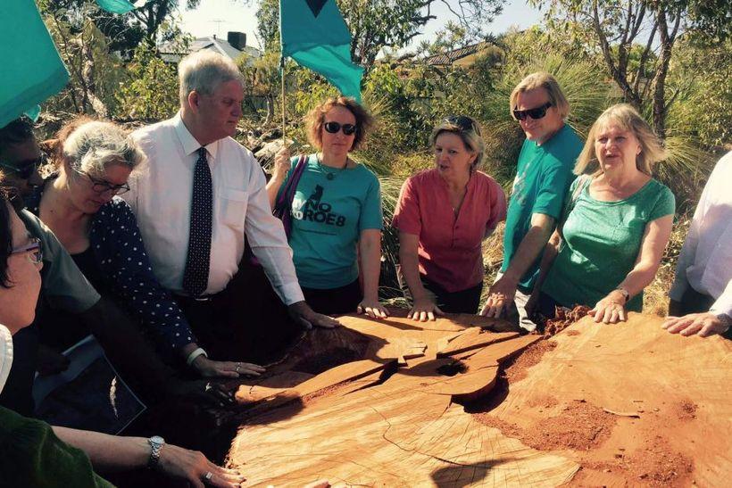 A stump of a 300-year-old Tuart felled at Beeliar Wetlands.