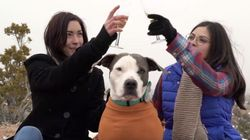 Animal Shelter's Version Of 'The Bachelor' Is Way Better Than The Real
