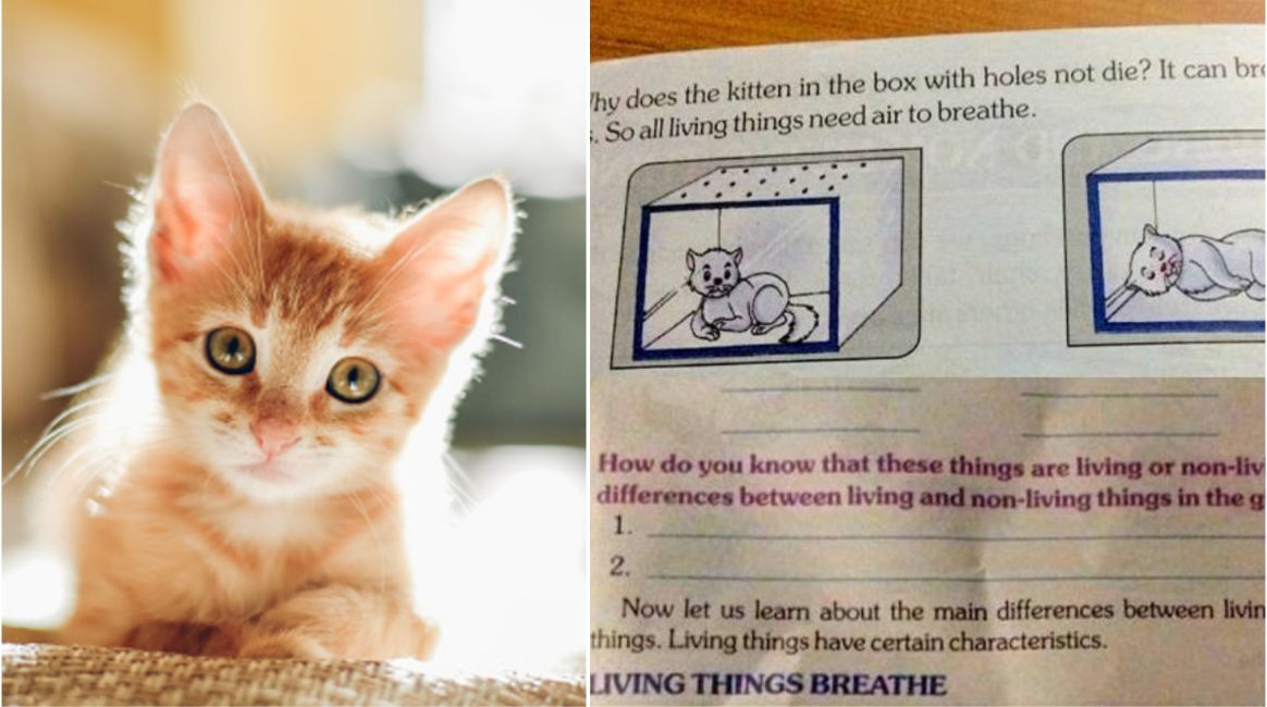 School Textbook Instructing Nine-Year-Olds To Kill Kittens Sparks