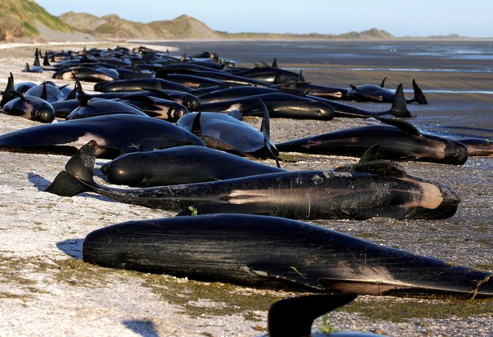 "Dead whales were marked with an ""x"" so rescuers would know they could not be saved."