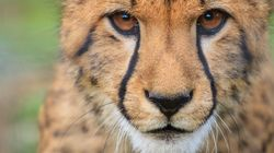 Climate Change Is A Far Bigger Threat To Wildlife Than We