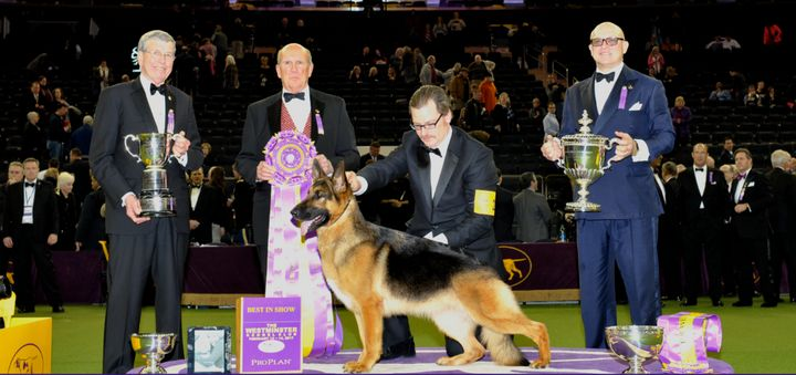 A Pleasant Distraction: Westminster Kennel Club Dog Show