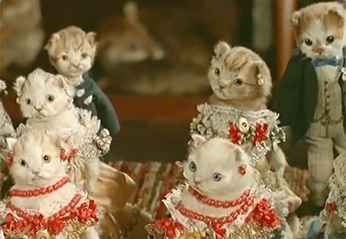 A collection of taxidermy cats is seen at a museum in Scotland