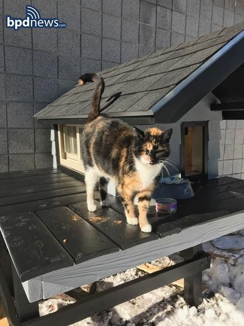 SWAT Cat in front of her new digs.