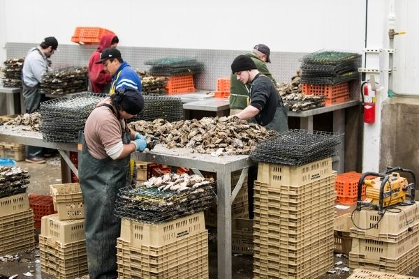 Taylor Shellfish Farms in Shelton, Washington